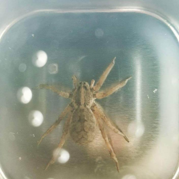Pest Control Services Las Vegas