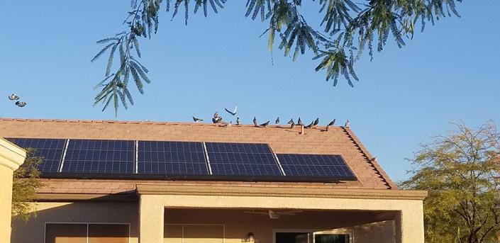 Pigeon Control Las Vegas