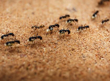 Services pest control