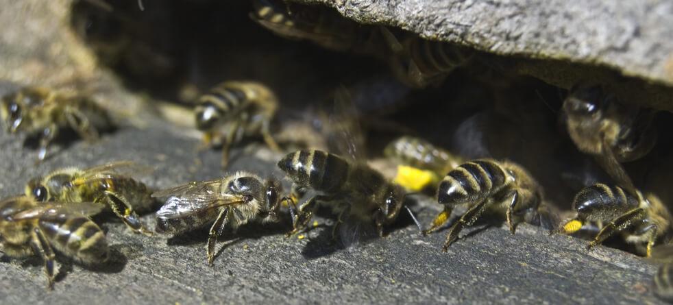 Bee control Las Vegas