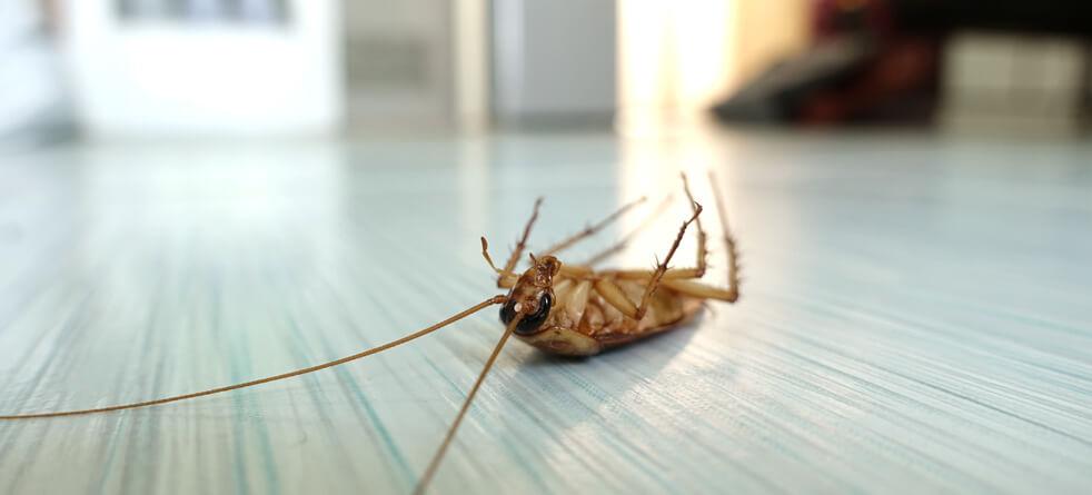 Residential pest control services Las Vegas