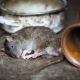 Warning signs of pests in your house