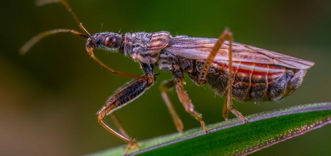 harmful pests