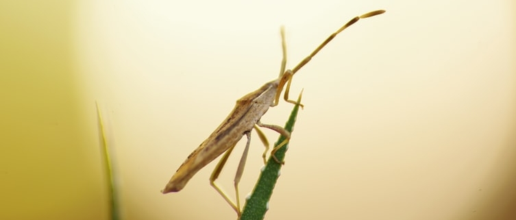 House Bugs
